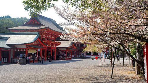 近江神宮 神楽殿前の桜の木の下から桜門を