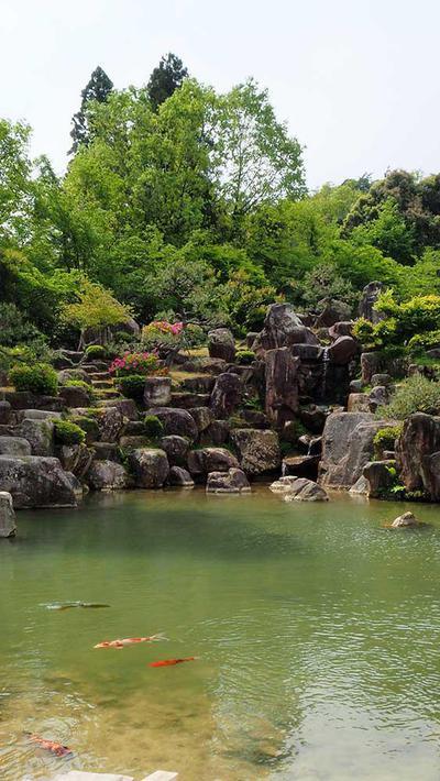 水尾庭園 自然の丘陵に配された巨石と優雅に泳ぐ緋鯉