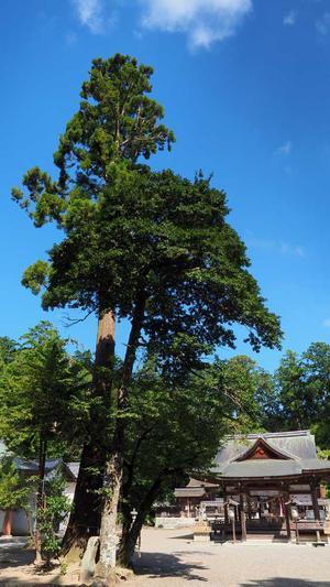 正面参道から立派な木々に覆われた奥石神社