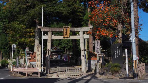 新宮神社 正面の鳥居。 柿の実のダイダイがキレイに!