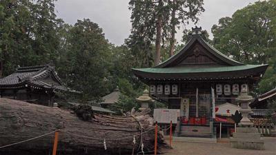 拝殿と倒れた老木
