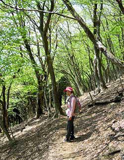 竜王山登山口に向けた雑木林