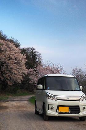 山桜の淡い発色 目立つスペーシア