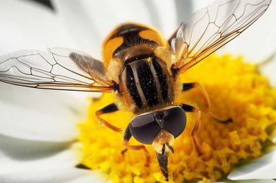 ハチの音 構えた構図に 花粉撒く