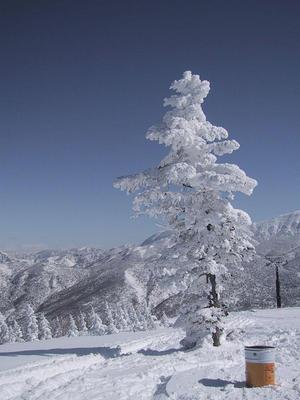奥志賀高原 樹氷 (昔のタバコポイント...)
