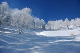 奥志賀高原スキー場 ヒルサイドコース合流