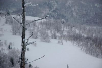 奥志賀高原 凍える老木