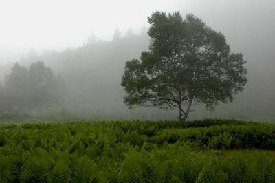 志賀高原 木戸池周辺の湿原より