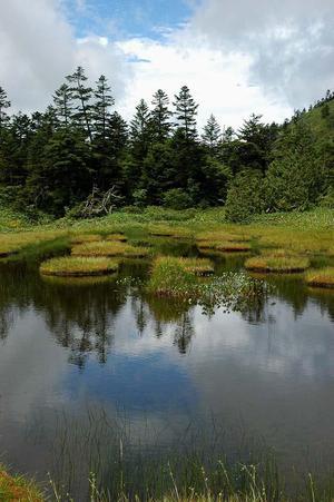 志賀高原の湿原 四十八池
