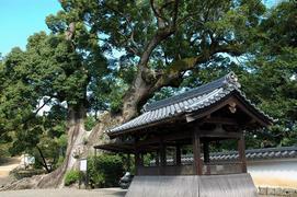 3番 風猛山 粉河寺(参道沿いで)